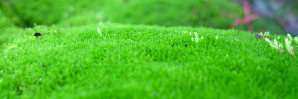 Algae Farming: Everything you need to know