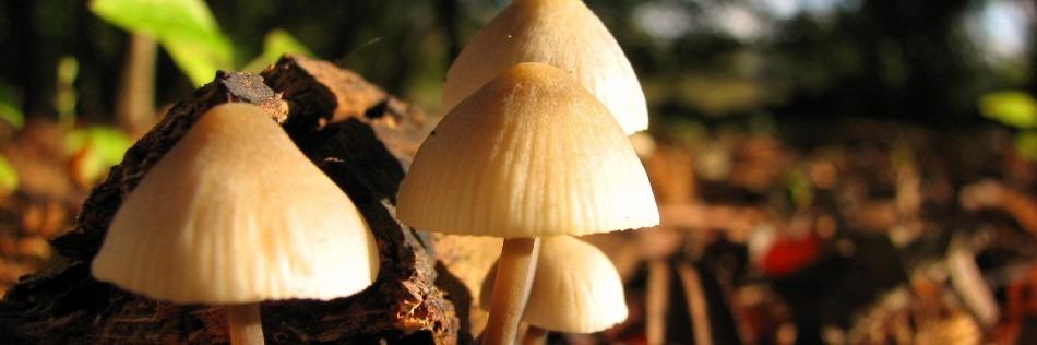 Mushroom Cultivation & Tips