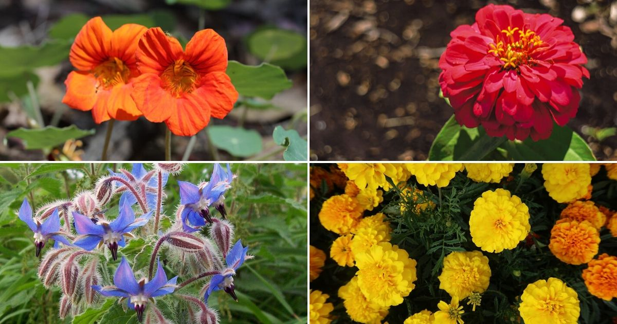 15 Best Flowers to Grow in Your Vegetable Garden - And Why