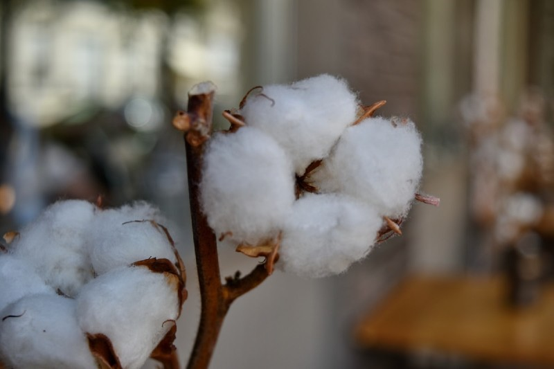 Best cotton features