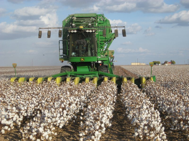 Agrotechnics for cotton farming