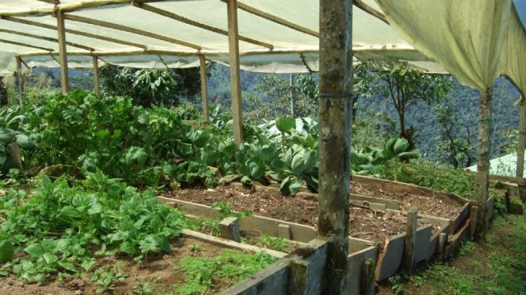 10 Pros and Cons of Organic Farming