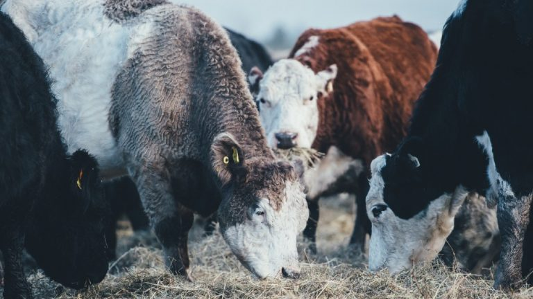 10 Most Profitable Livestock to Rase