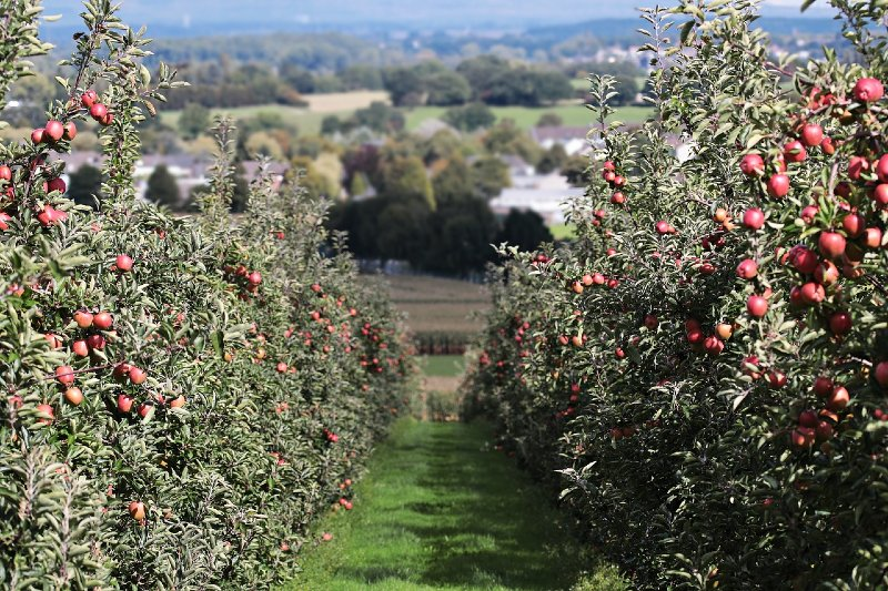 Things to Know Before Starting an Orchard