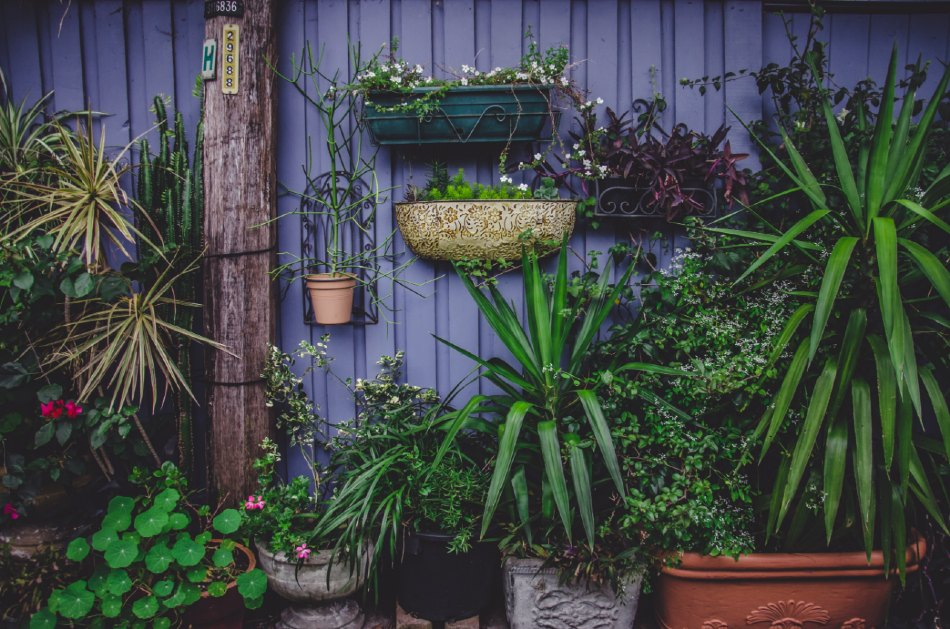 Vertical Gardens - Everything you need to know