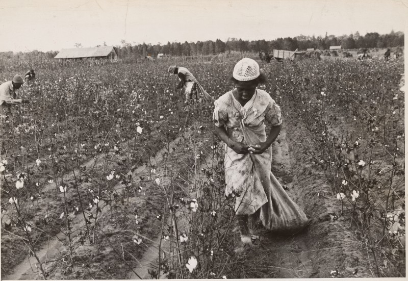 Cotton throughout history