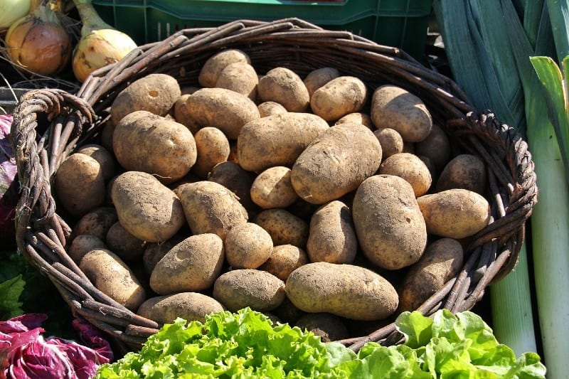 How To Grow Potatoes - Everything You Need To Know