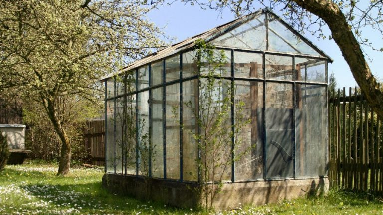 Growing Vegetables in Greenhouses is More Profitable