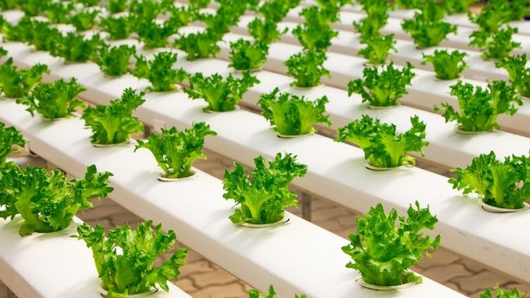 How to Start Hydroponic Growing: Everything You Need to Know About Hydroponic System