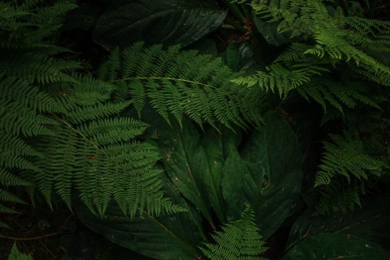 15 Best Plants for Vertical Garden