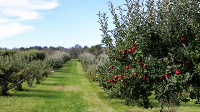 Types of Orchards (And All You Need to Know About Them)