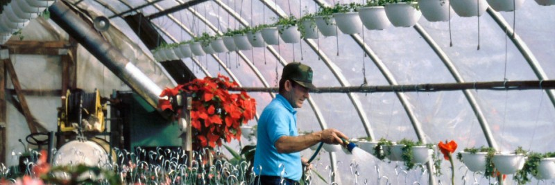 16 Greenhouse 'How To Start' Tips For Beginners