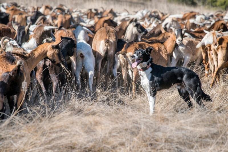 10 Most Profitable Livestock to Rase