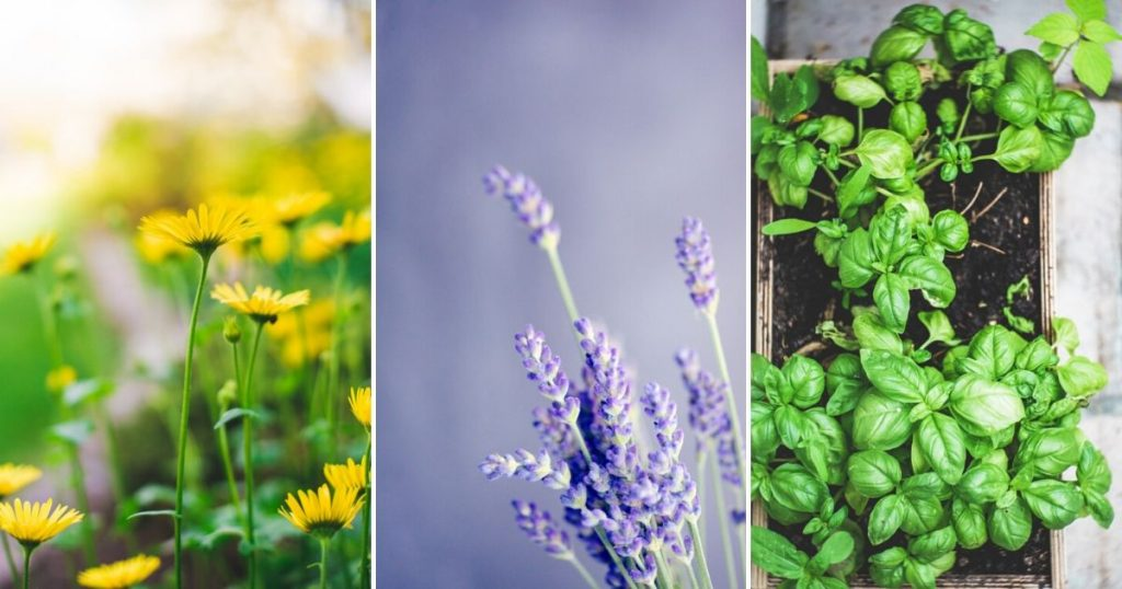 10 Most Profitable Herbs to Grow