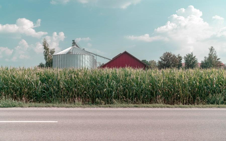 Growing Corn - Planting, Maintenance, Harvesting, Diseases and more