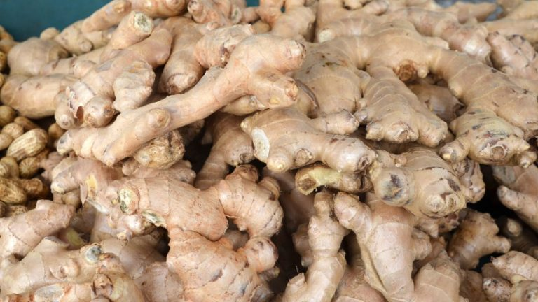 Ginger Growing – How to, Soil, Planting, Care, Harvesting