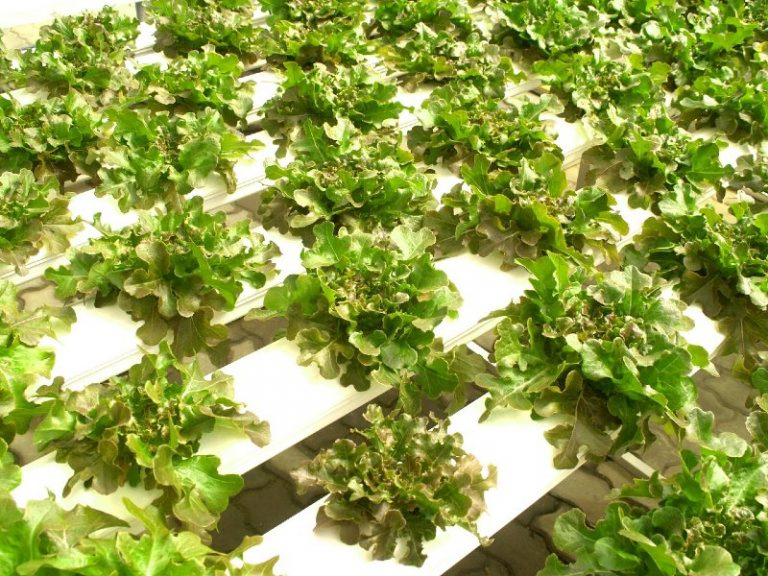 Is Hydroponic Farming Profitable?