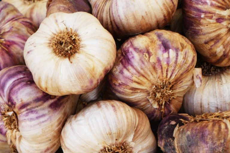 Growing Garlic – How to Grow, Plant and Harvest Garlic