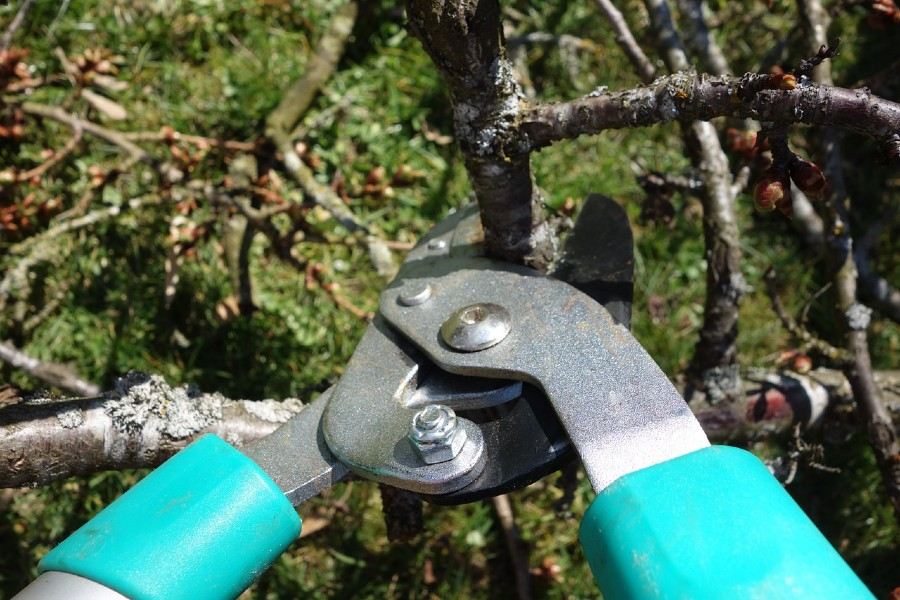 Proper Trees Pruning in Orchards: Follow The Growing Pattern And You Will Get a Fruitfull Tree