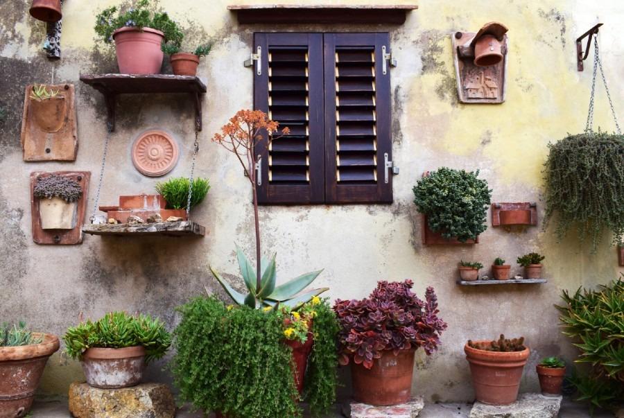 Organic Garden at Home (Terrace Gardening)