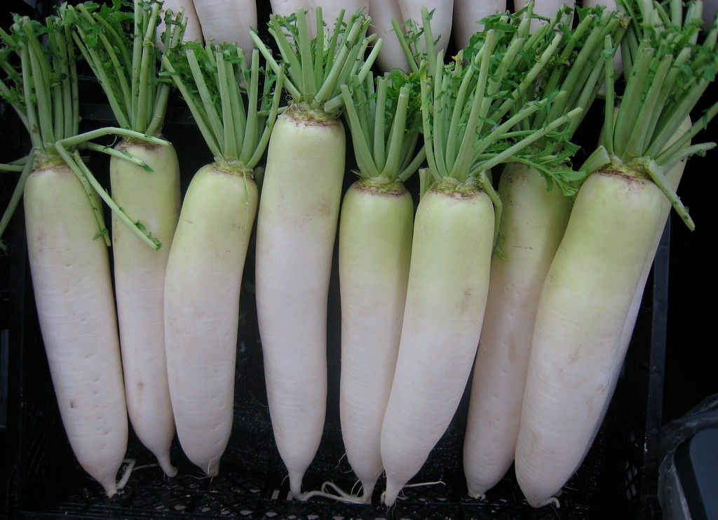 How to Grow Daikon Radish: Planting, Sowing, Harvest, Microgreens, Soil and More