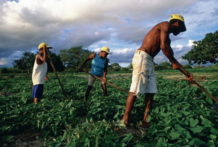 Differences Between Sharecroppers and Tenant Farmers