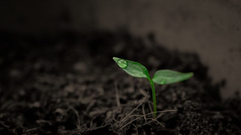 Is Soil a Renewable Resource?