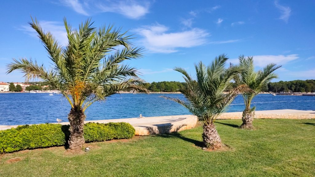 How Can Palm Trees Grow in the Sand By the Salty Ocean Water?