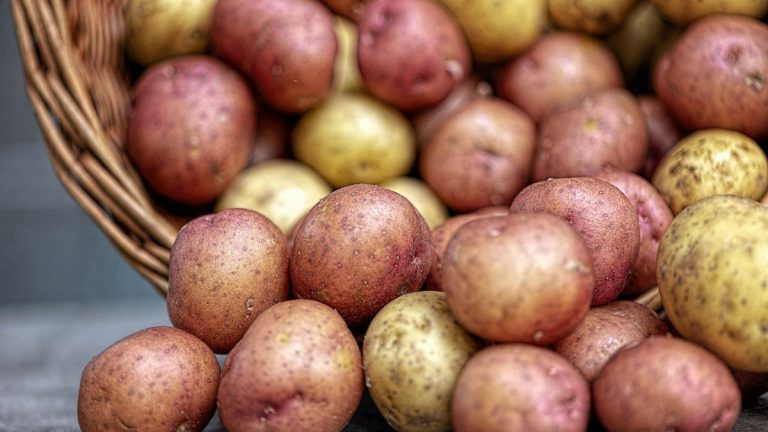 Are Seed Potatoes Different From Regular Potatoes?