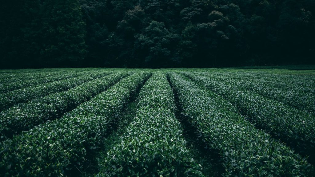How Do Farmers Grow Crops Step by Step