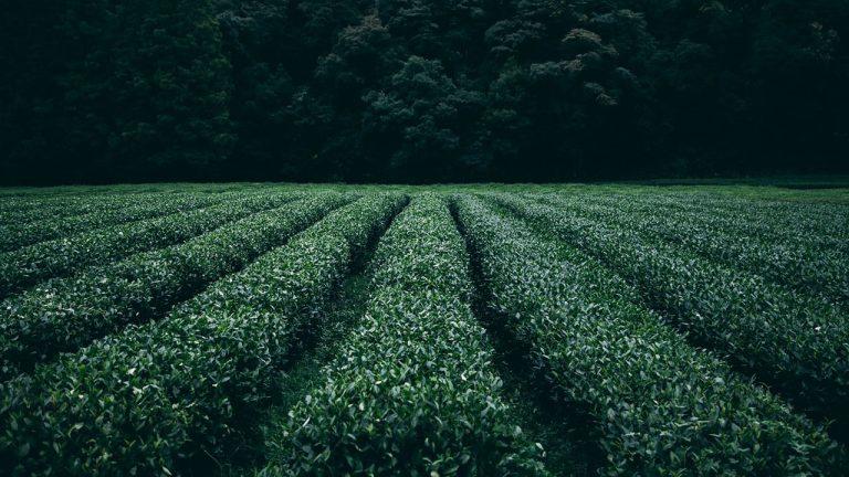 How Do Farmers Grow Crops? Step by Step
