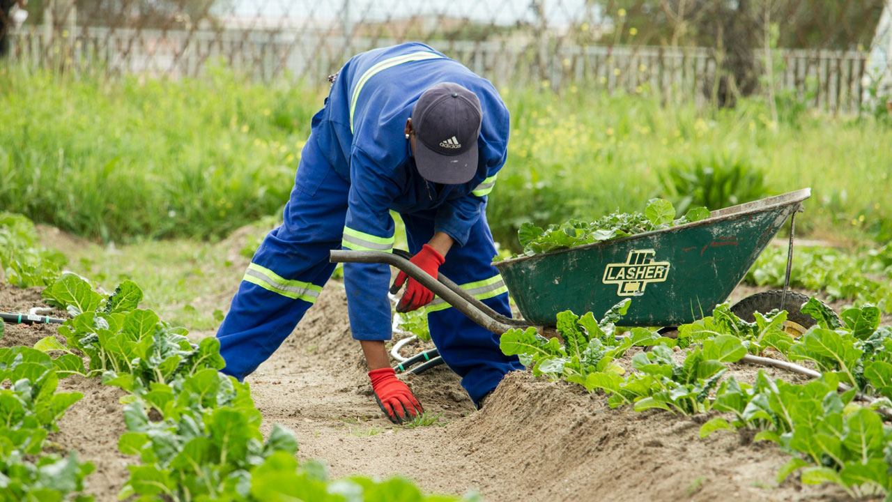 What Is Intensive Subsistence Farming
