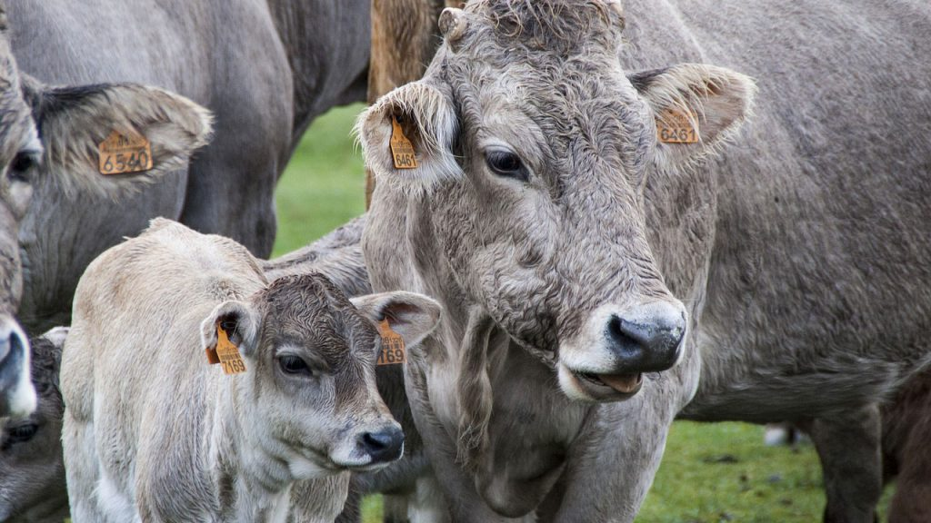 What Is The Difference Between Livestock Farming And Animal Husbandry