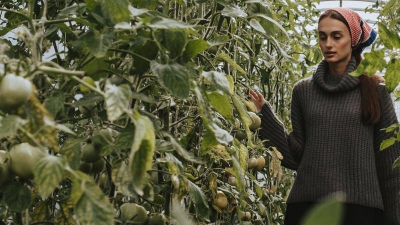 How to Grow Kumato Tomatoes