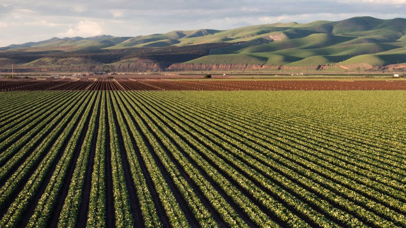 Difference Between Subsistence Farming And Intensive Farming