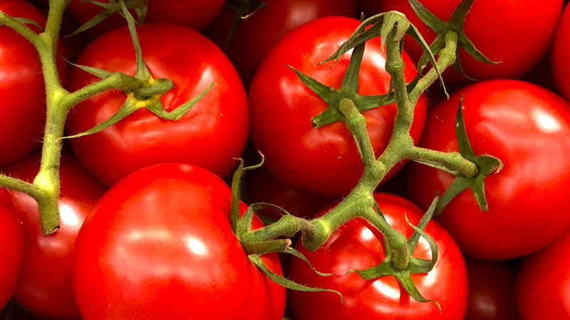Growing Tomatoes During the Rainy Season (and How to Protect Them)