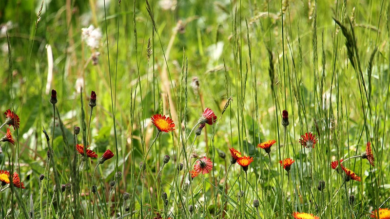 Does Vinegar Kill Grass And Weeds?