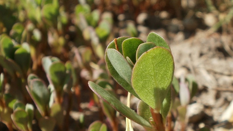 How to Get Rid of Purslane Weeds? (For Good)